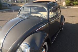 1956 Oval window ragtop beetle!!!just redone....gorgeous!!!!