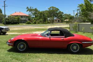 Jaguar in Tin Can Bay, QLD Photo