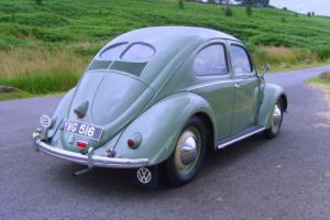 1951 Split Rear Window Beetle