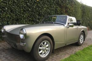MG MIDGET SILVER BIRCH Stunning car - thousands spent, very admired YPX120L