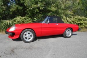 1981 Alfa Romeo Spider Photo