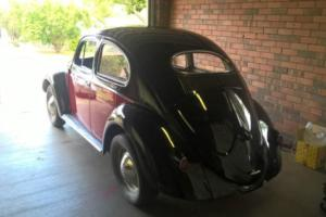 VW Oval Beetle 1956 in QLD