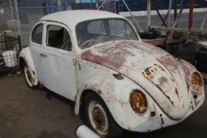 VW 1964 BEETLE RESTORE /PARTS / GARDEN ART