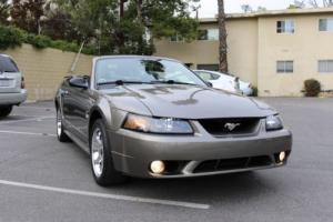2001 Ford Mustang SVT Cobra Photo