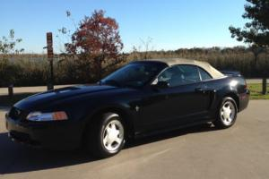 2000 Ford Mustang Photo