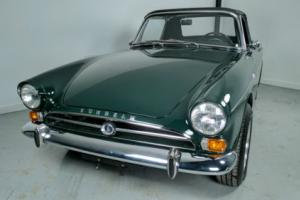 Sunbeam: Tiger Photo