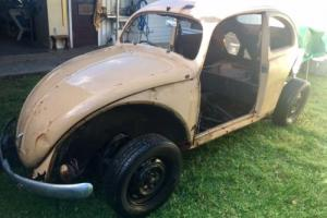 VW Beetle 1956 Oval on 1969 floorpan (ball joint/swing arm), excellent project.