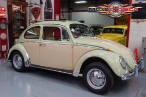 1966 Volkswagen Beetle-New Beetle Photo