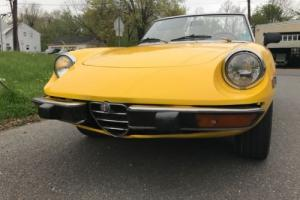 1974 Alfa Romeo Spider Photo