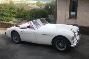 Austin Healey 3000 BJ8 - 1964  Photo