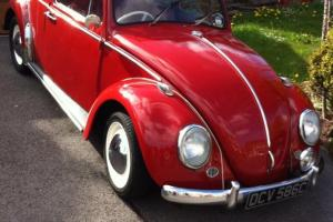 Beautiful 1965 VW Beetle - Stunning in Red - Ready for the Summer