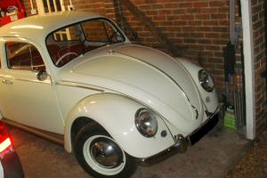 66 reg VW Beetle 1300 New MoT/Tax White with red interior very pretty bug