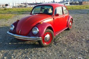 Volkswagen : Beetle - Classic Standard