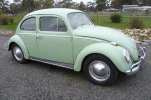 Beetle 1965