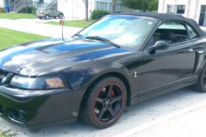 2003 Ford Mustang SVT Cobra Photo