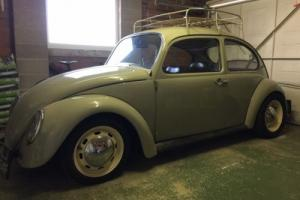 vw beetle Photo