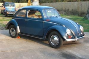 Late 59 Indigo blue project beetle. UK Registered