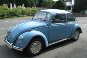 Classic 1967 VW Beetle - Restored