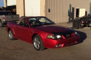 2001 Ford Mustang Cobra Photo