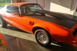 1980 Pontiac Firebird Photo