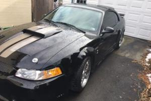 2000 Ford Mustang colbra